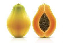 Papaya nedir ?