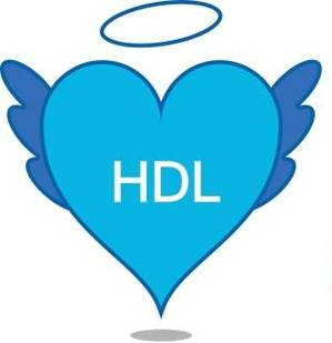 What is HDL Cholesterol