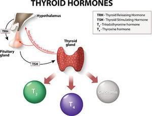 Hipotiroidi teşhis