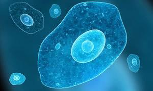 amipli dizanteri nedir entamobea histolytica